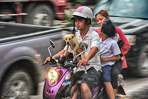 Family of three and a dog on a motor scooter in Thailand.