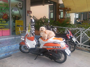 Dogs love motorbikes. Dog sitting on a motorbike.